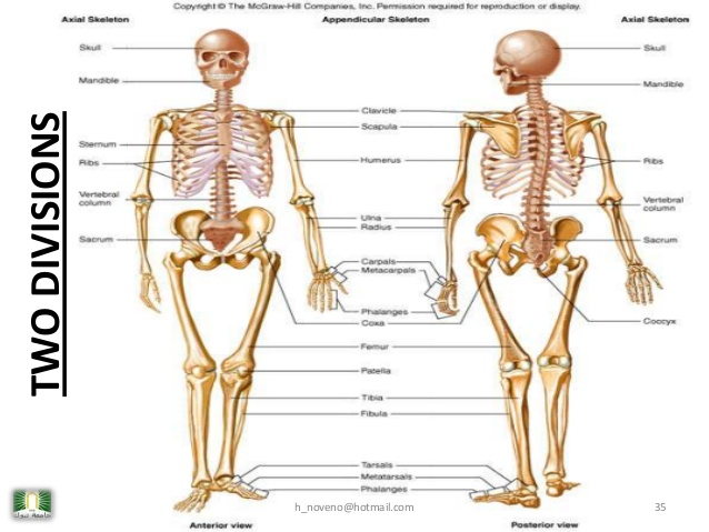 unit-4-skeletal-system-35-638.jpg