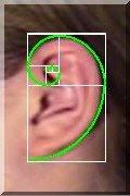 earspiral.jpg
