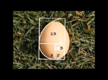 egggs.jpg