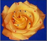 Fibona50.jpg