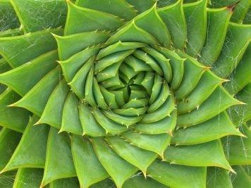 fibonacciSpiralALOE.jpg