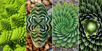 geometry-plants[3].jpg