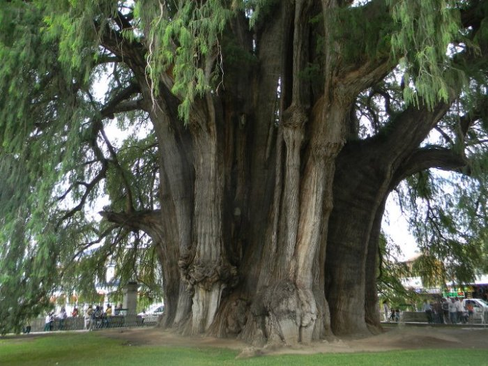 huge-tree.jpg