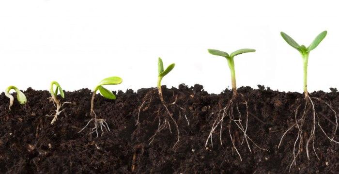 seed-growing.jpg