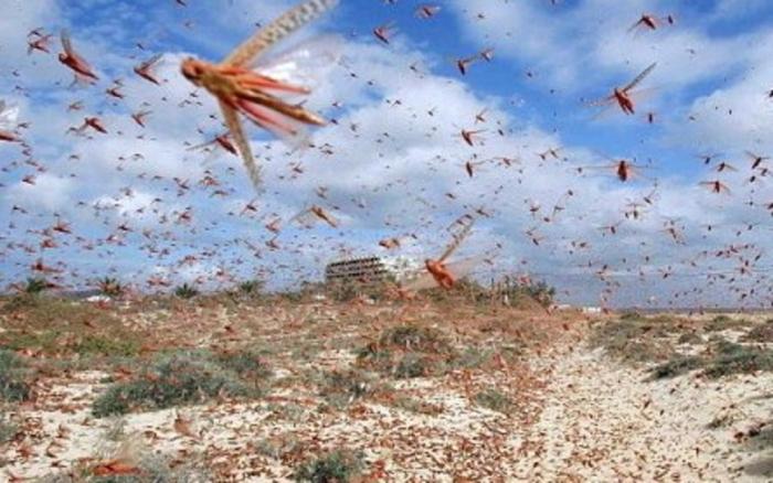 locusts1.jpg