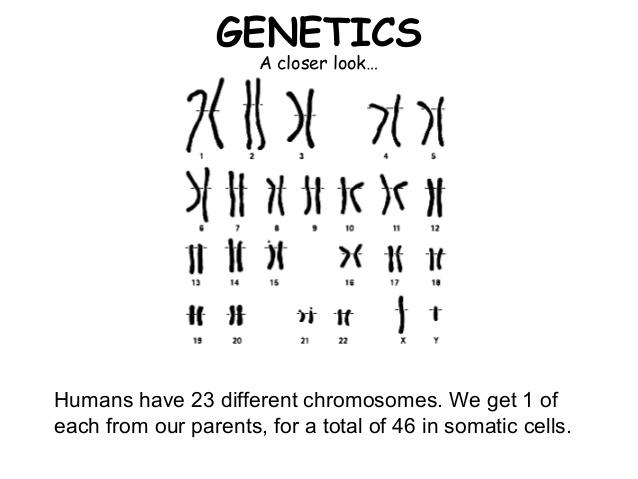 03-mendelian-genetics-5-638.jpg