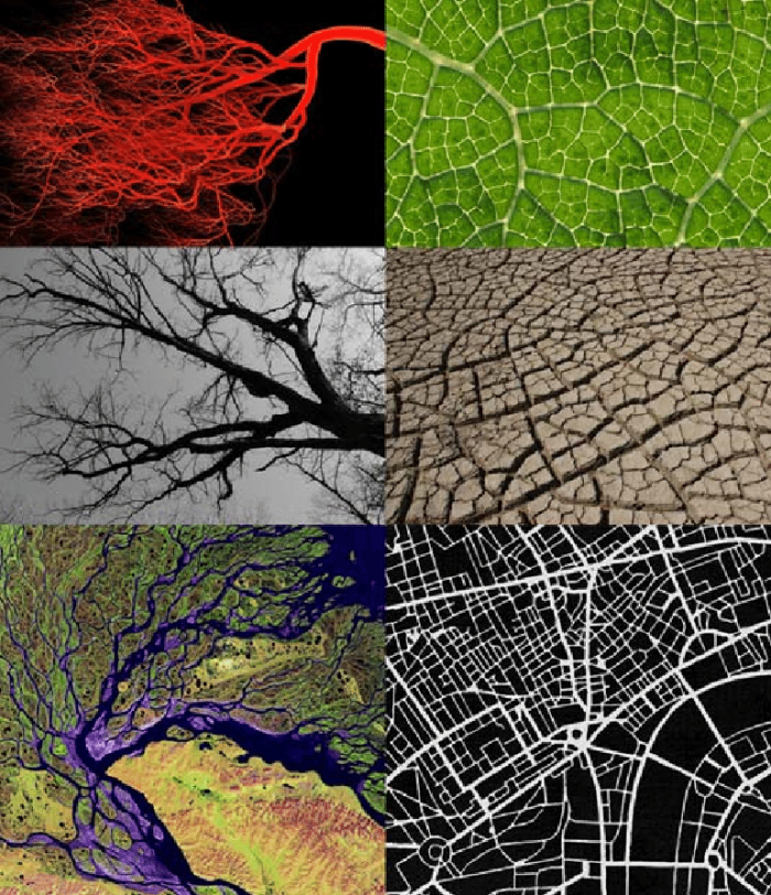Blood-vessels-winter-tree-Amazon-River-delta-leaf-veins-cracked-earth-and-city-plan